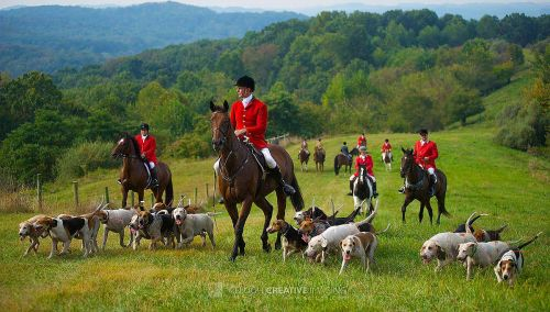 Cuyahoga Valley Fox Hunt Club, Shot it Tuscarawas County